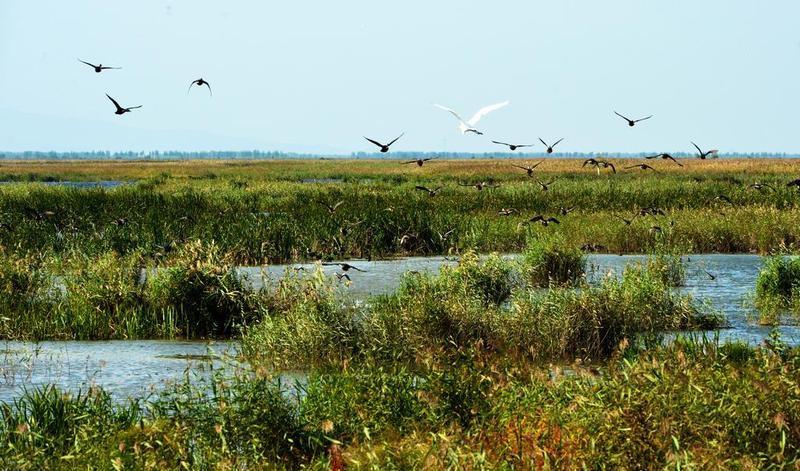 宝清七星河湿地生态旅游区