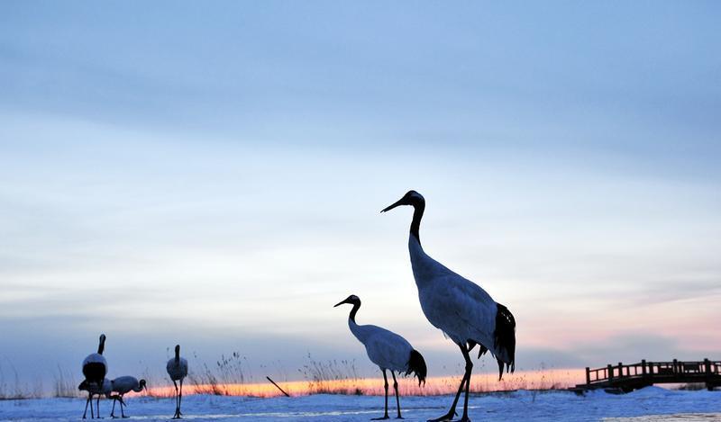 盐城沿海滩涂丹顶鹤国家级自然保护区
