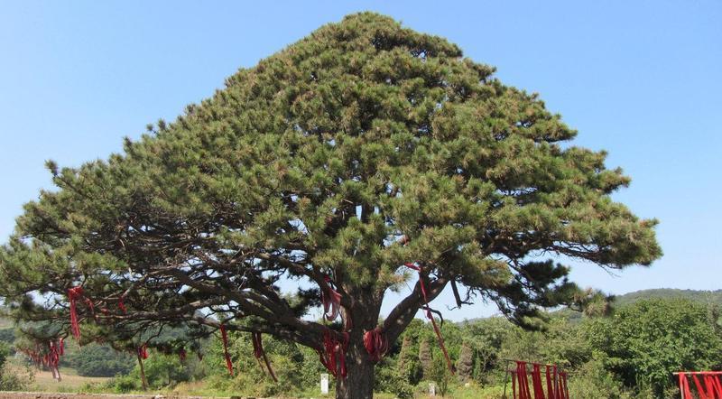 铁岭红带沟大清神树景点图片