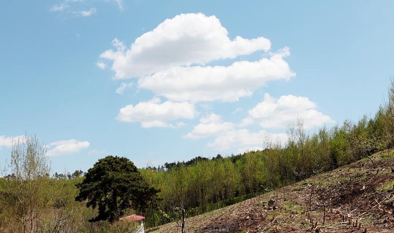 顺城房身千亩梨园旅游风景图片