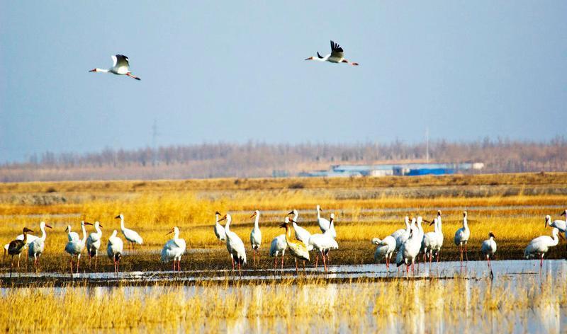 镇赉莫莫格国家级自然保护区