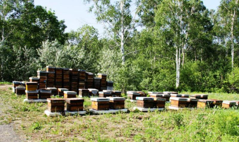 饶河东北黑蜂国家级自然保护区