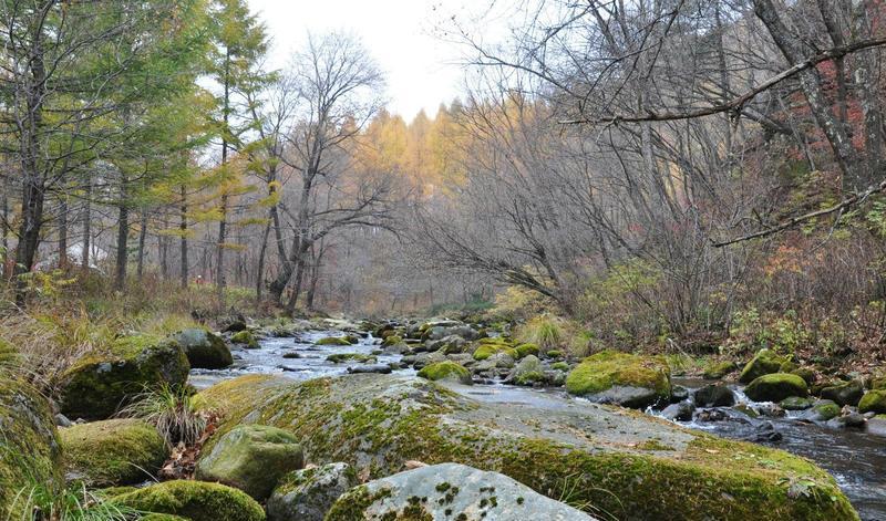 辽宁大地森林公园景点图片