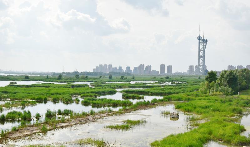 大庆龙凤湿地自然保护区