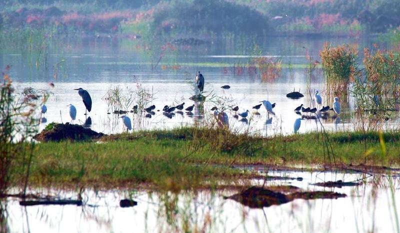 赣榆和安湖湿地公园