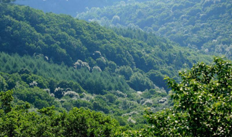 辽宁白石砬子国家级自然保护区