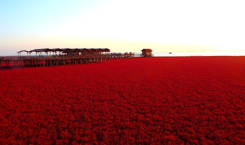 盘锦红海滩风