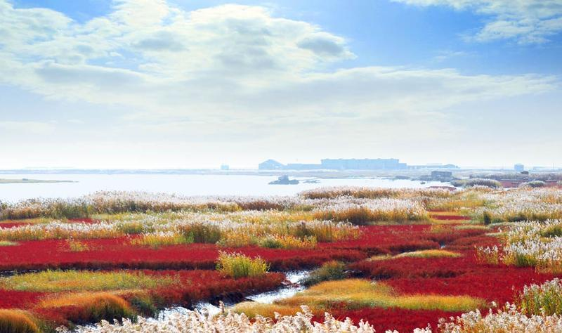 辽宁双台河口国家级自然保护区景点图片