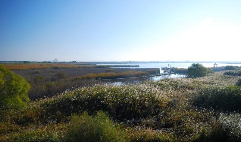 河南豫北黄河故道湿地鸟类国家级自然保护区