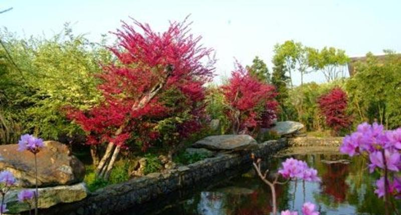 景德镇得雨生态园景点图片