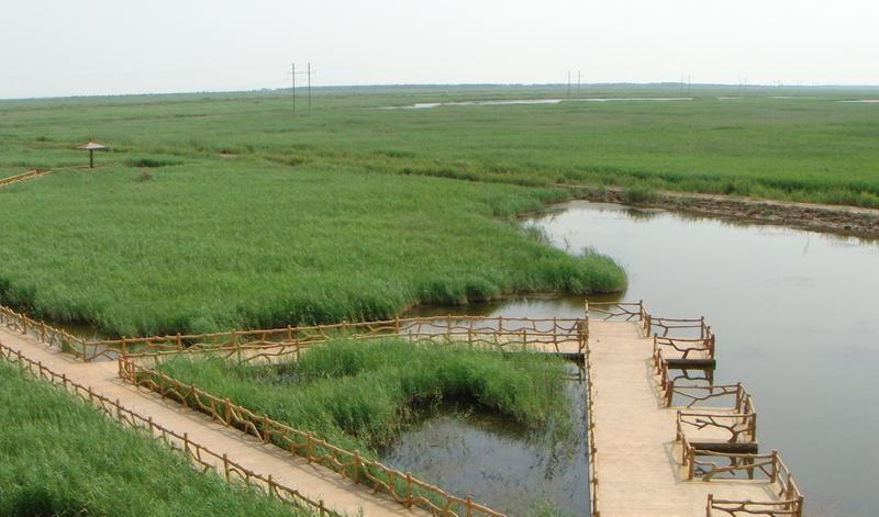山东黄河三角洲国家级自然保护区