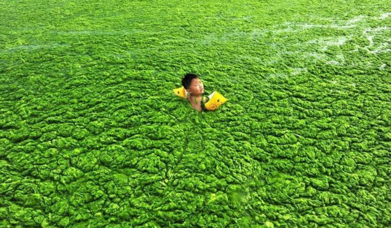 青岛第一海水浴场 之 浒苔风景图片