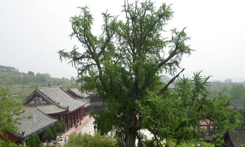 枣庄甘泉禅寺景点图片