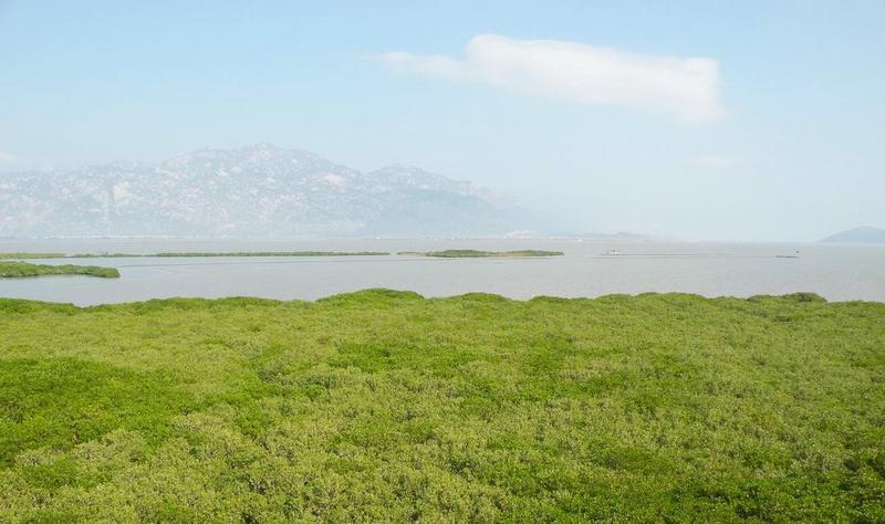 福建漳江口红树林国家级自然保护区