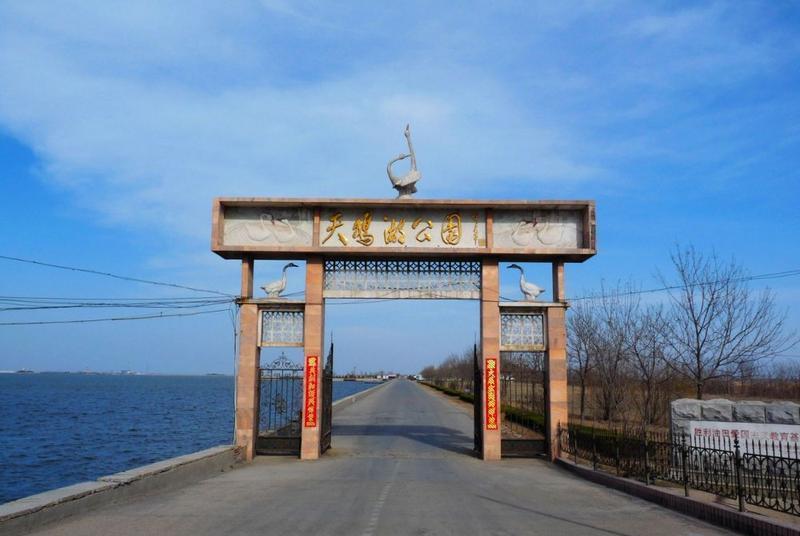 东营龙悦湖天鹅湖