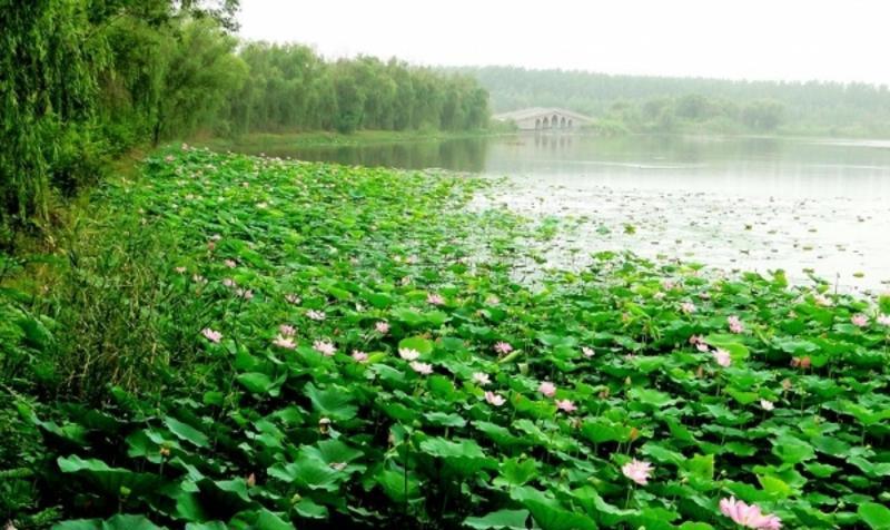 阜阳颖州西湖风