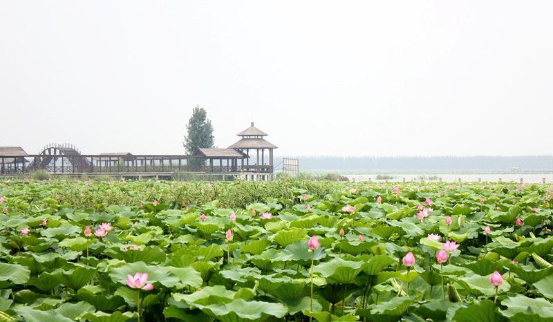 济宁微山湖景点图片