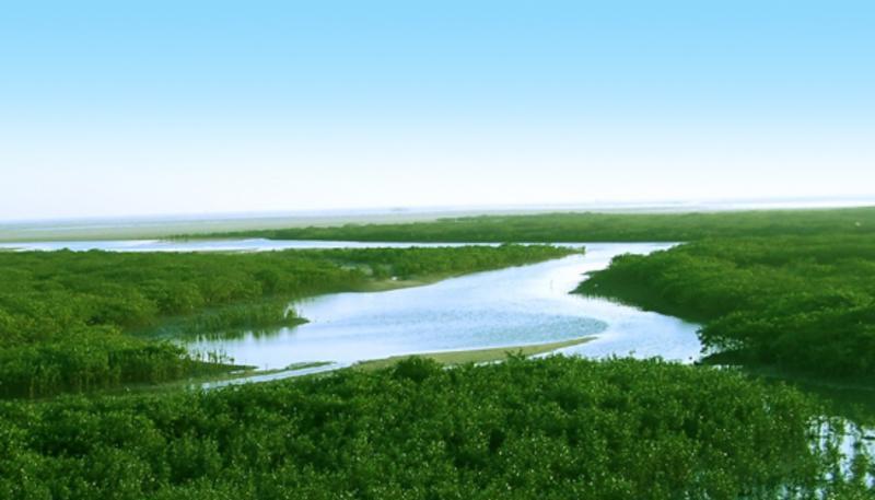 北海山口红树林生态国家级自然保护区景点图片