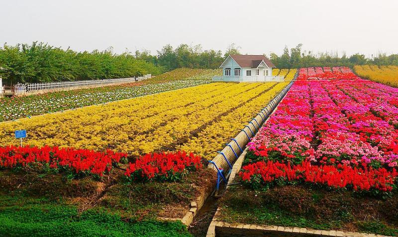 佛山顺德陈村花卉世界
