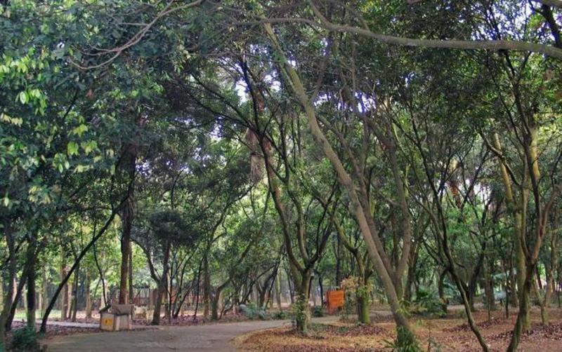良凤江国家森林公园景点图片
