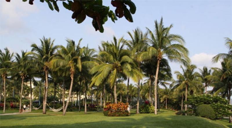 琼海椰寨农家乐景点图片