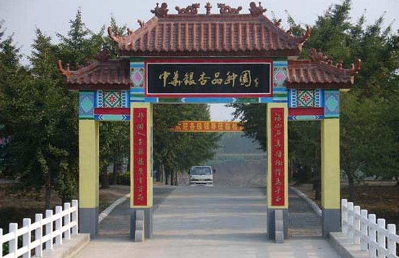 郯城新村银杏园旅游风景图片