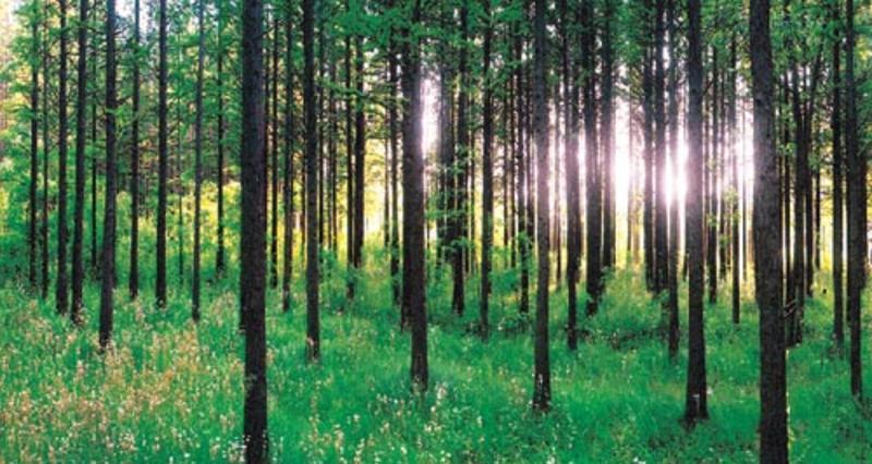 日照海滨国家森林公园景点图片