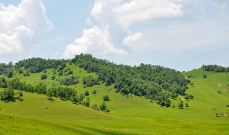 陕西关山草原