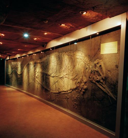河南省地质博物馆 之 鱼龙风景图片