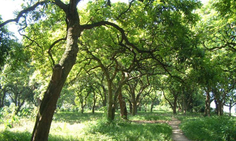 泸州张坝桂圆林景点图片