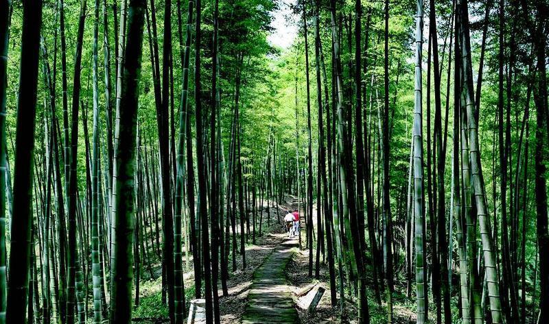 遵义赤水竹海国家森林公园景点图片