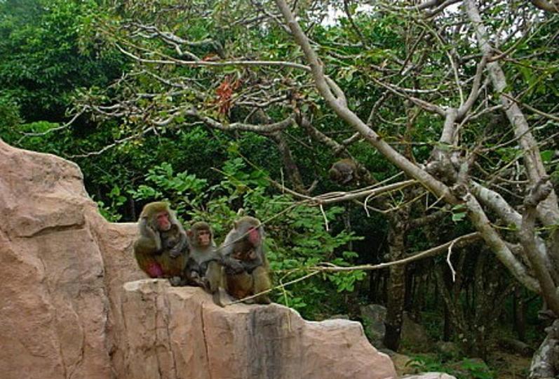西双版纳猴山景点图片