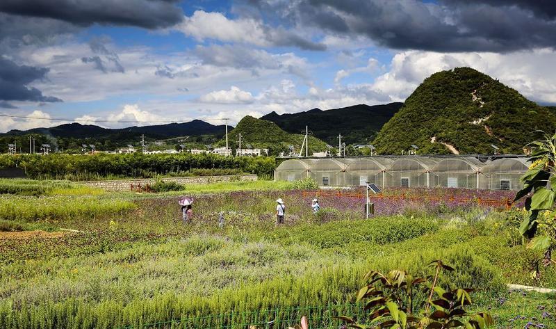 贵阳蓬莱仙界·白云休闲农业旅游景点图片