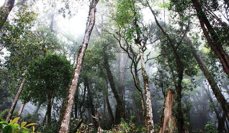 屏边大围山风 之 原始森林