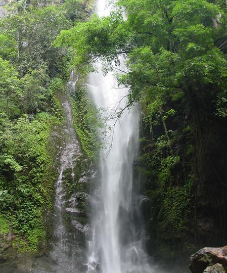 瑞丽莫里热带雨林风景点图片