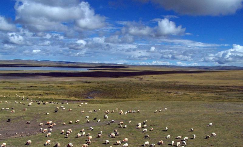 西藏羌塘草原