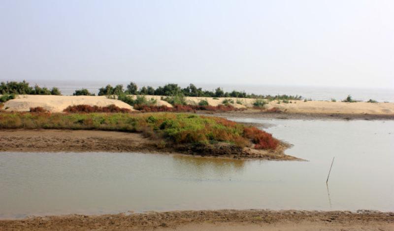 山东贝壳堤岛与湿地国家级自然保护区景点图片