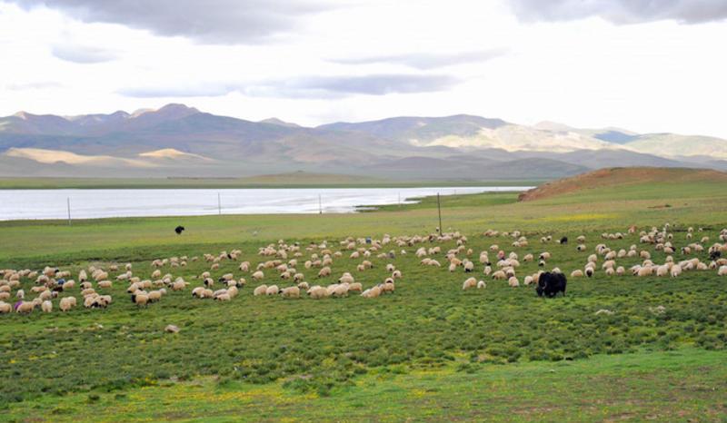 西藏哲古风景点图片