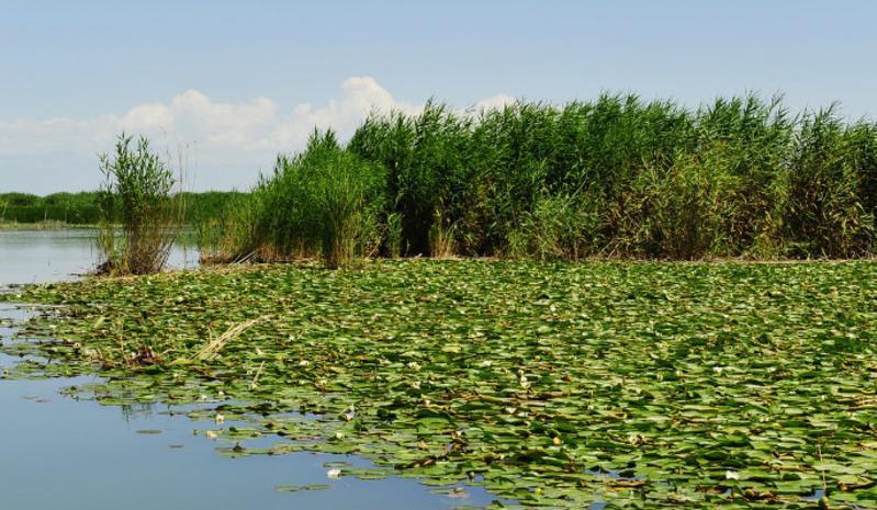 新疆库尔勒莲花湖旅游区景点图片