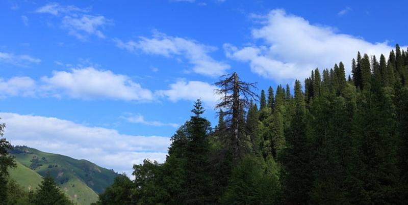 那拉提国家森林公园
