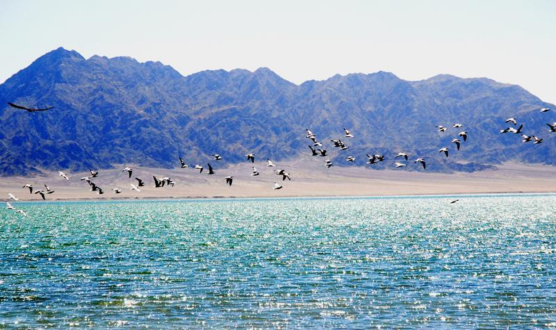 阿克塞苏干湖候鸟自然保护区旅游风景图片
