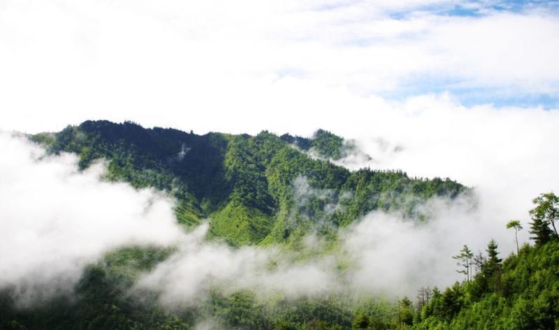 陕西长青国家级自然保护区