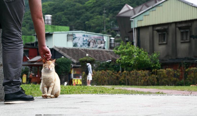 台湾猴硐猫村景点图片