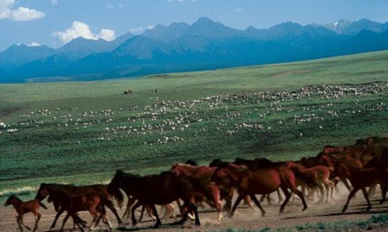 甘肃祁连山国家级自然保护区