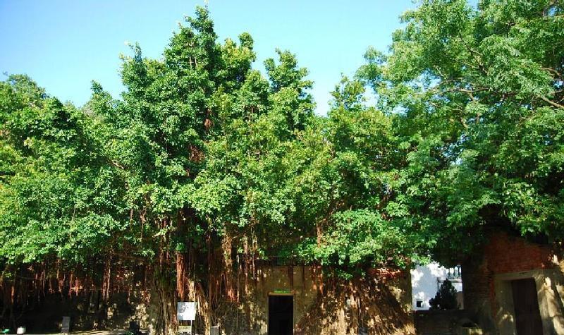 台南安平树屋景点图片