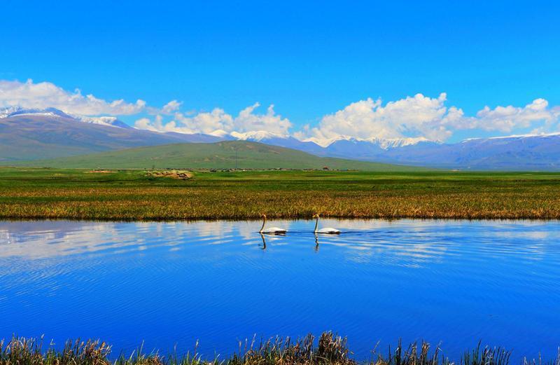 新疆巴音布鲁克天鹅湖景点图片