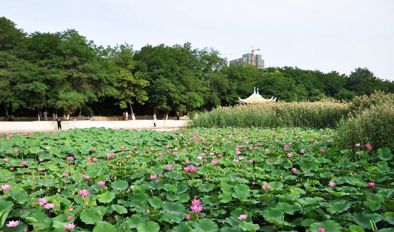 银川龙池旅游风景图片