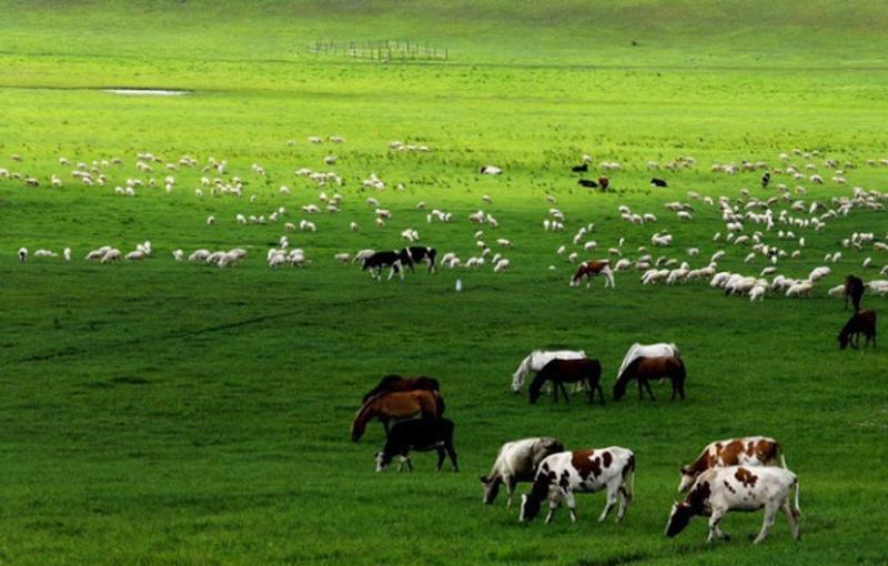 青海金银滩草原旅游风景图片