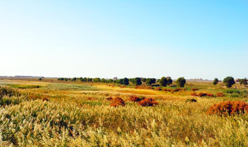 敦煌西湖国家级自然保护区的图片和照片